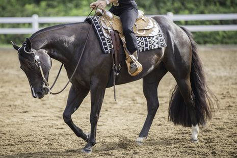 Image of Person Riding Horse