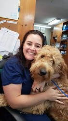 Image of Vet with a Dog