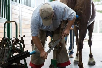 Dr. Dan Carter working on a horse