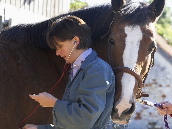 A female equine veterinarian listening to the heart of a brown horse.