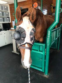 Image of Horse with Eye Shield