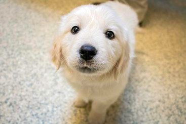 Image of cute puppy looking up at the camera