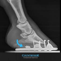 X-Ray of Puncture Wound in Horse's Hoof