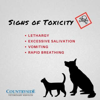 Infographic for signs of toxicity