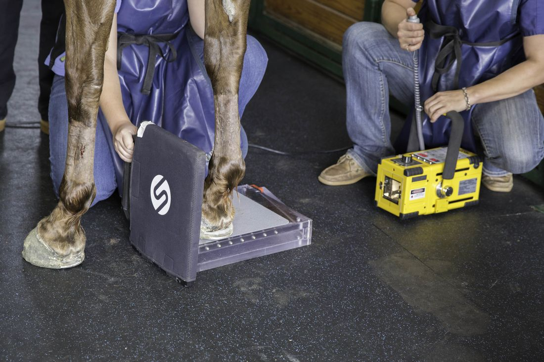 image of vets working on a horse's hoof