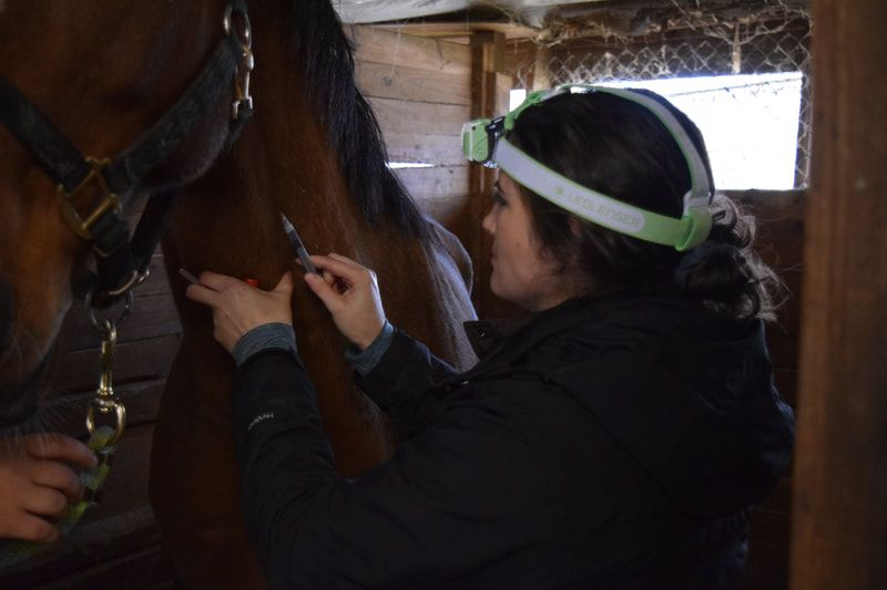 Image of Horse receiving a Vaccination