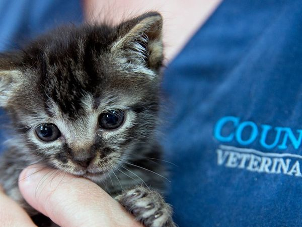 An image of a Countryside Veterinary Services vet tech holding a black, white, and gray kitten.