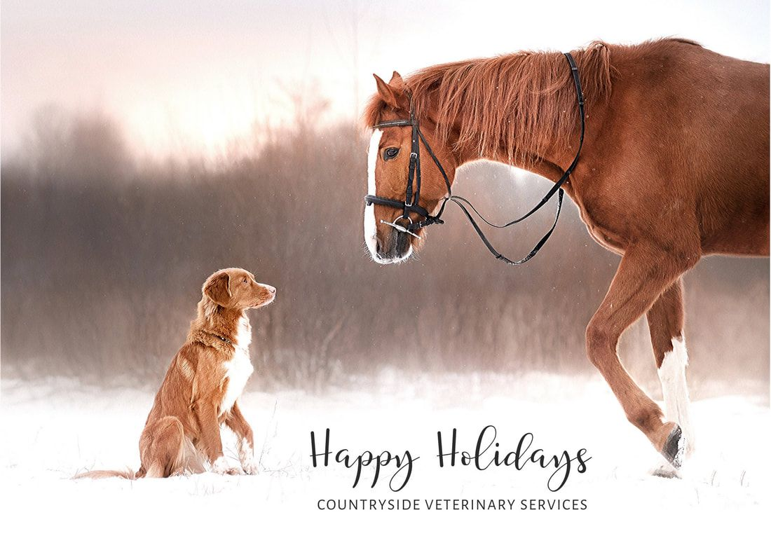 Happy Holidays from Countryside Veterinary Services