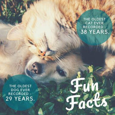 Graphic showing ages of oldest Dog and Cat