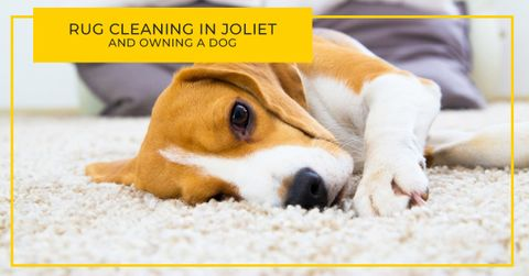 RUG-CLEANING-IN-JOLIET-AND-OWNING-A-DOG-5c2fdda507734.jpg