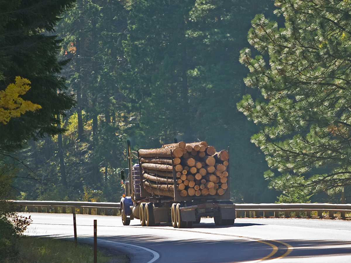 Logger hauling tree logs away after tree removal service.