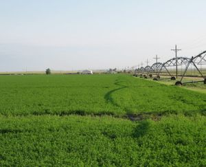 Keenesburg-CO-143-Acres-Irrigated-Farm_9-845x684-160923-57e545468d39b.jpg