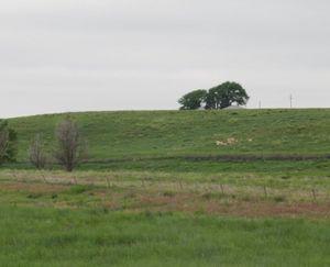 Vona-CO-132-Acre-Ranch_3-845x684-160928-57ebc24f83bd9.jpg
