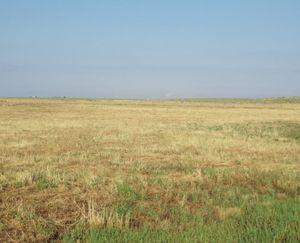 Keenesburg-CO-143-Acres-Irrigated-Farm_8-845x684-160923-57e54542e89b4.jpg