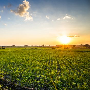 Image of sun rise over crop field.