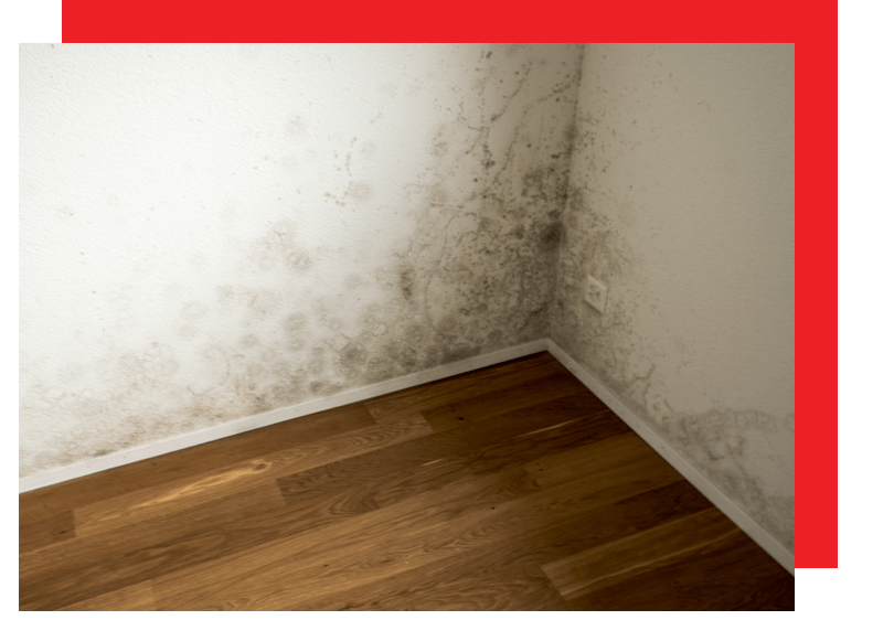 mold image.png