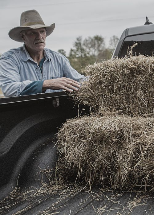Worker With Hay in Truck Bed