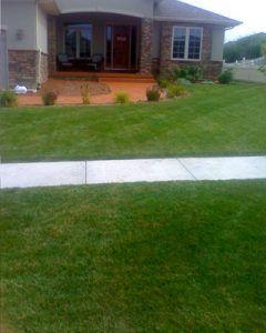 lawn-5c76c183d4154-240x300.jpg