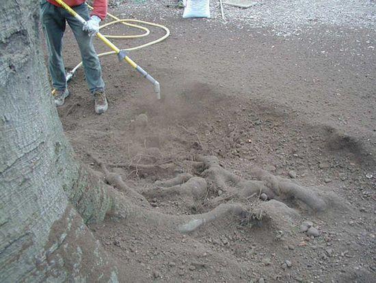 root 2.jpg