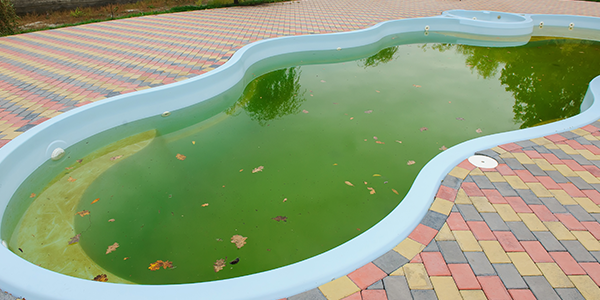 green-pool-cta-5d3f0405155d7.png
