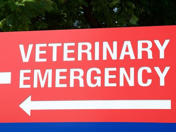 """A bright red and white sign with an arrow  that reads """"Veterinary Emergency""""."""