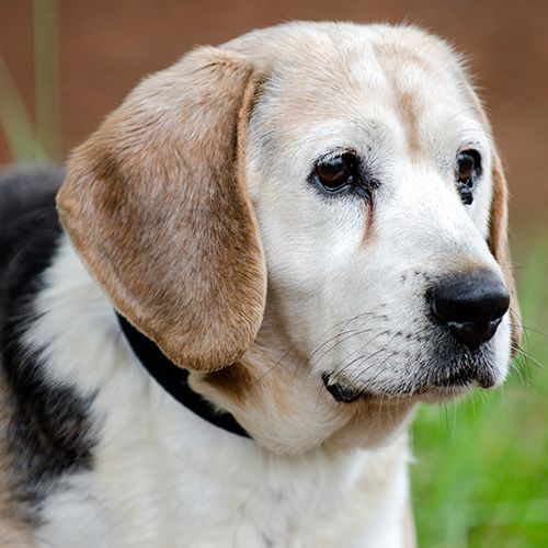 An image of a senior dog