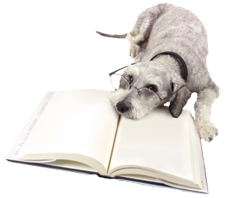A dog with glasses reading a book