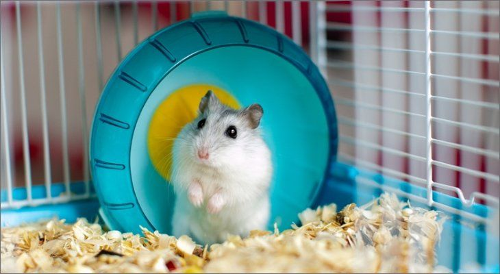 mouse in wheel
