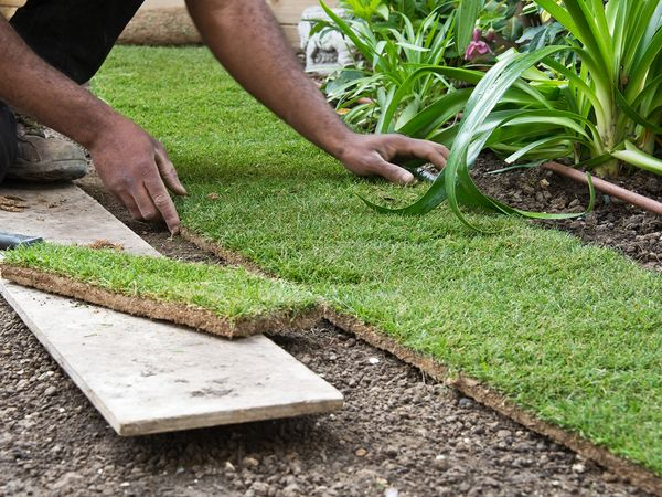 Image of a landscaper installing sod on a residential lawn.