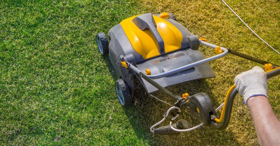 Importance Of Maintaining Your Lawn Year Round BlitzBlog Feat Image.jpg