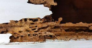 termite-infestation-on-your-hands.jpg