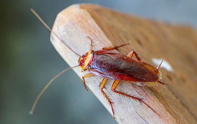 cockroaches.jpg