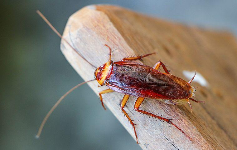 Cockroach on a board
