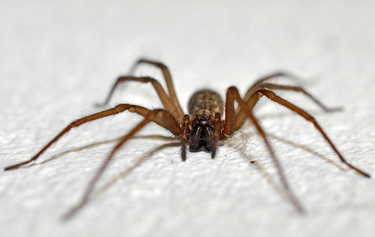 spiders-pest control.jpg