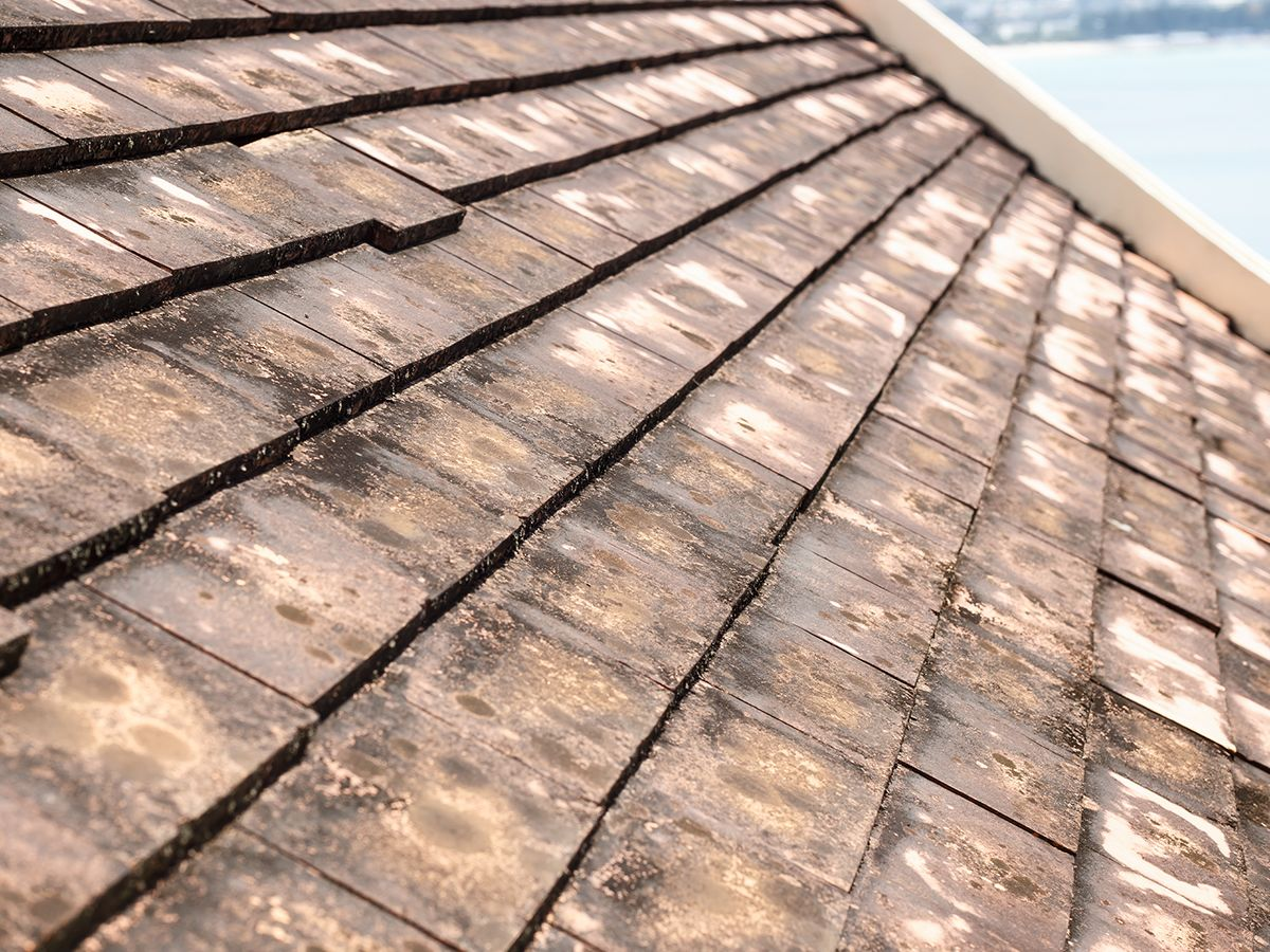 Moldy roofs can create health issues in your home