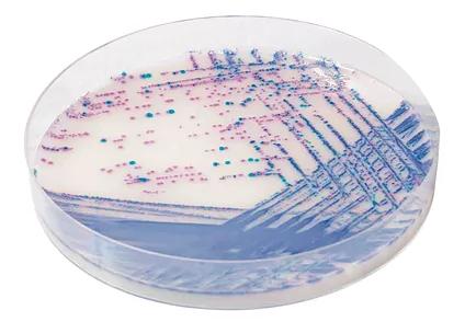 microbiology dish