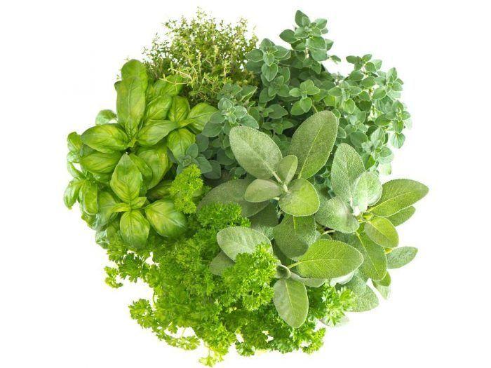 Herbs2-700x525-5af4809375775 (1).jpg
