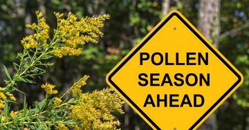 What is Pollen - and what to do about it