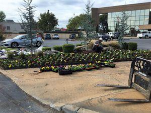 Plant installation.JPG