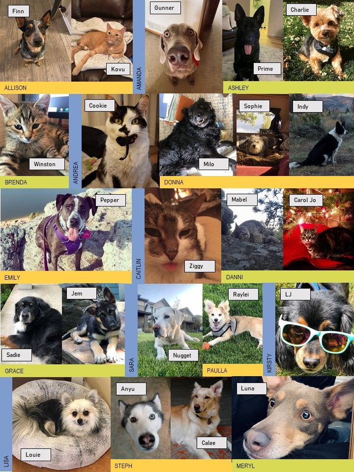 pets of gs.jpg