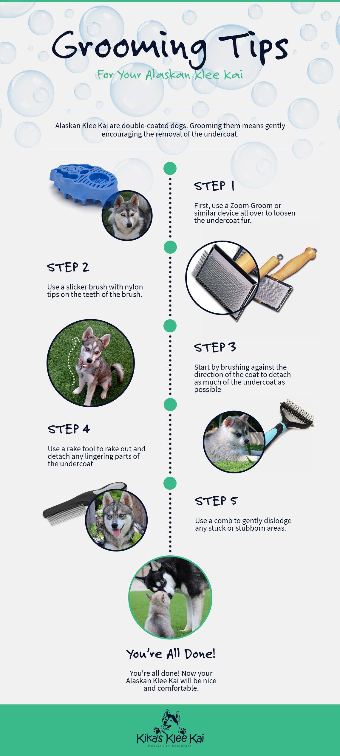 Grooming Tips For Your Alaskan Klee Kai.jpg