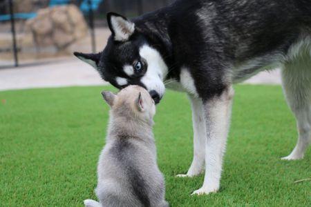 diamond and puppy.jpg