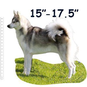 Standard Alaskan Klee Kai Size