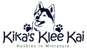 Kika's Klee Kai