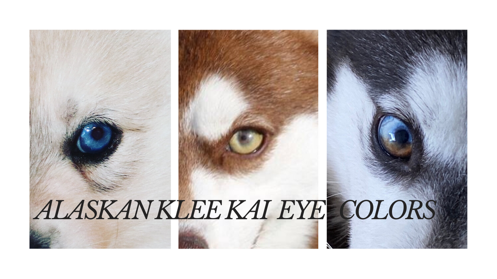 KLEE KAI EYE COLORS.png