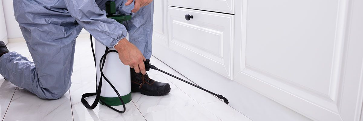 How to Build a Great Pest Control Website -Featured.jpg
