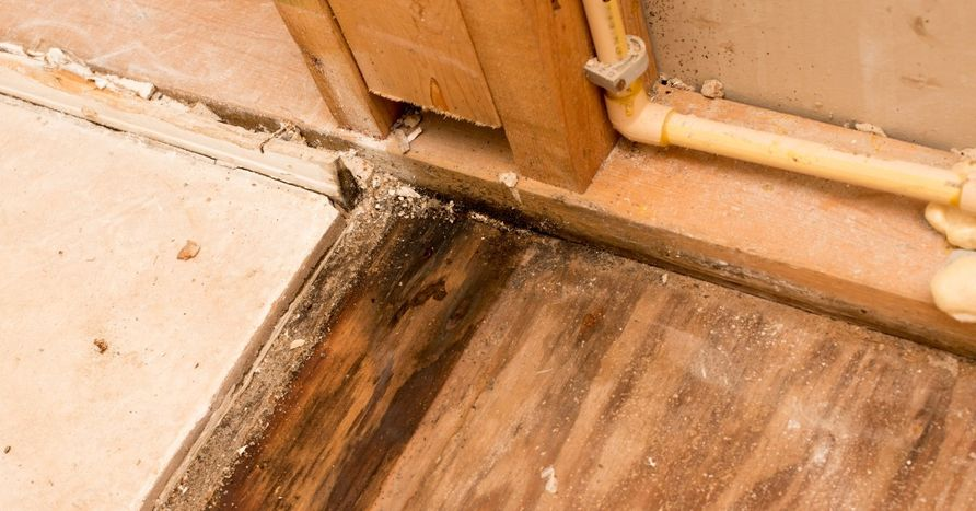 How to Get Rid of Mold pro klean