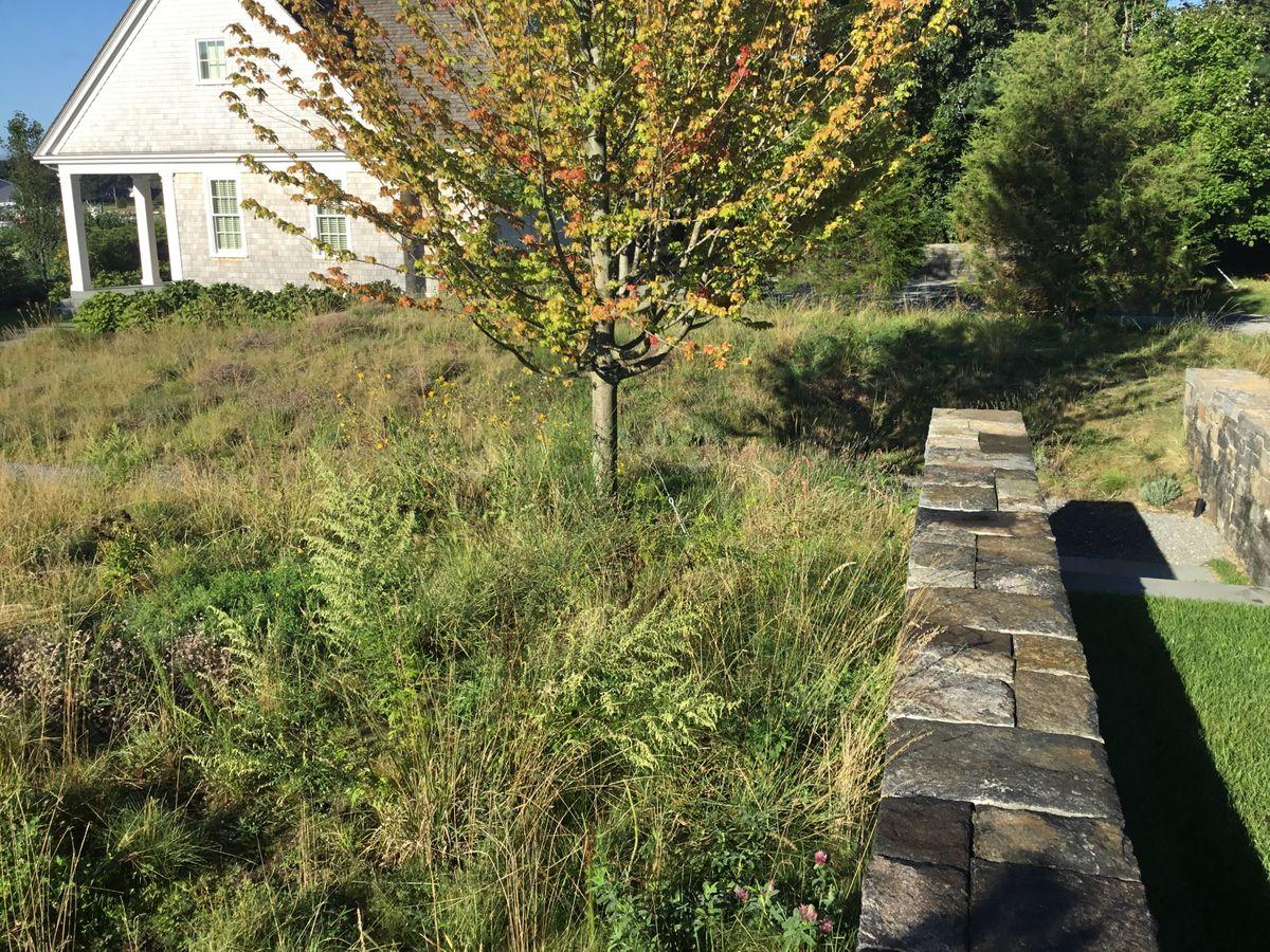 ANDLC - driveway-meadow wall.jpg