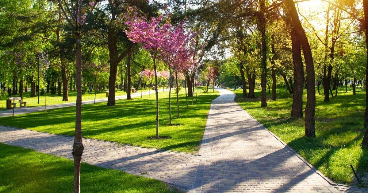 ftd-image-how-to-reduce-springtime-allergies.jpg