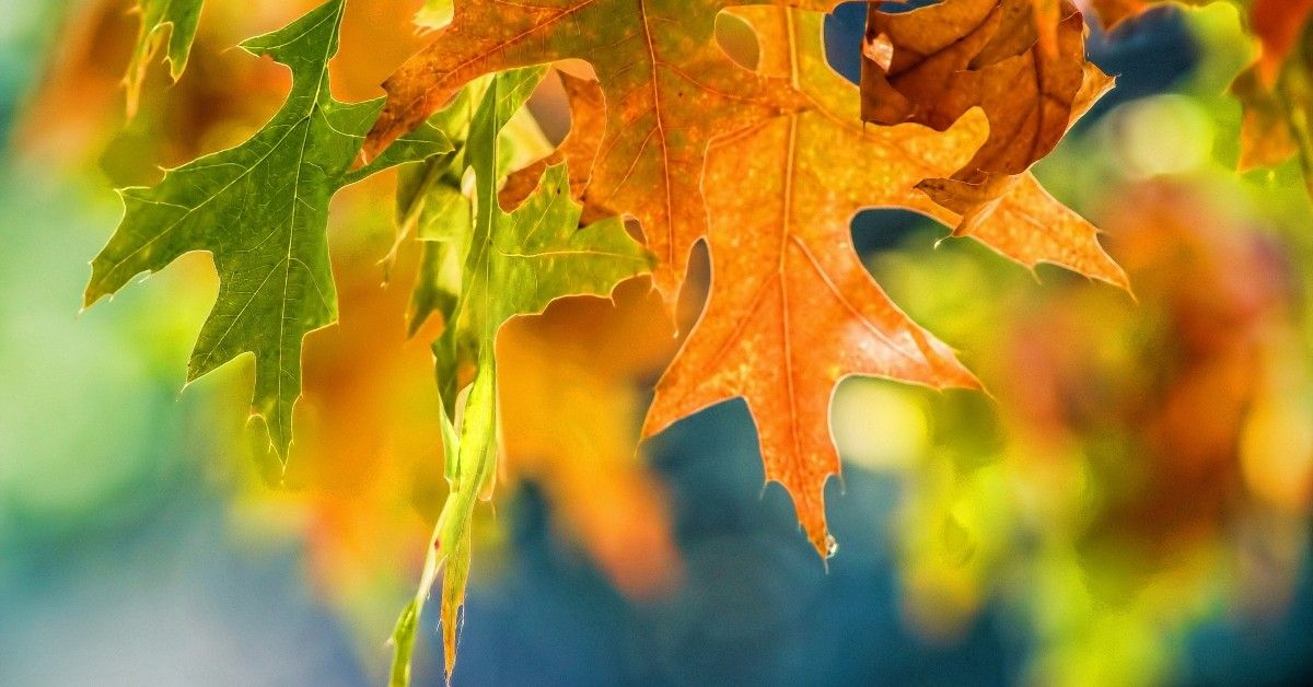 ftd-image-how-to-prepare-your-furnace-for-fall-and-winter.jpg